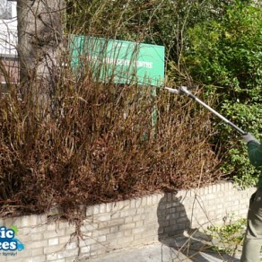 Fantastic Services Help Acol Nursery with a Gardening Service
