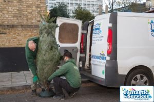 Christmas Tree Delivery by Fantastic Gardeners