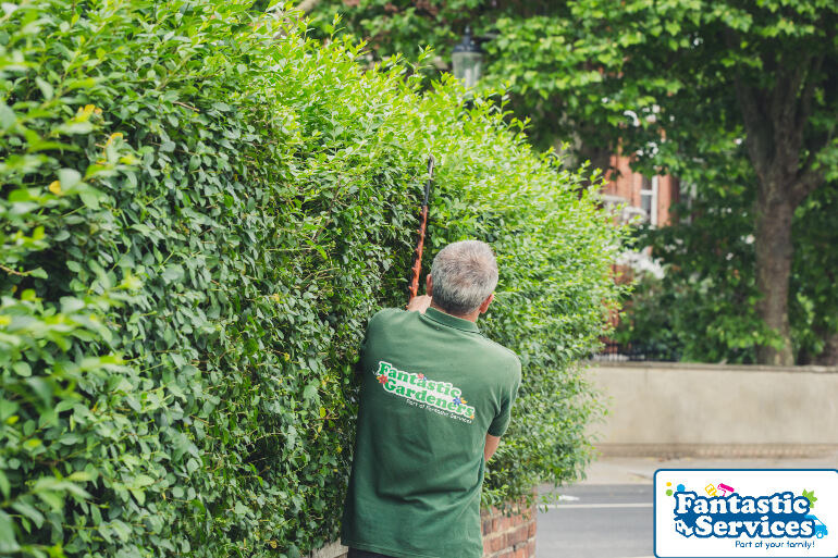 Hedge Trimming by Fantastic Gardeners 1