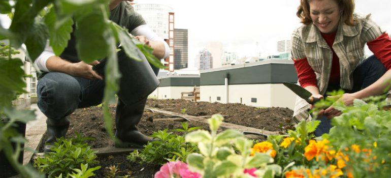 How to Create a Stunning Low Maintenance Garden