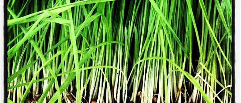 Apply citronella oils to the base of your fence