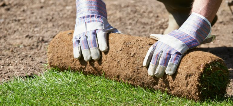 Could Laying New Turf on Old Turf be Successful