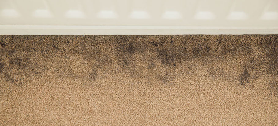How to clean black edges of a carpet