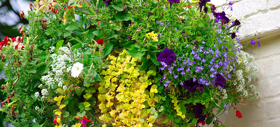 T_M-how-plant-hanging-basket-1