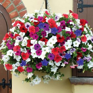 T_M-how-plant-hanging-basket-3