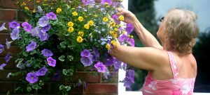 T_M-how-plant-hanging-basket-5