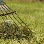 how to get rid of lawn moss
