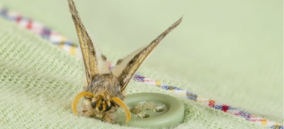 How to get rid of bugs - moths