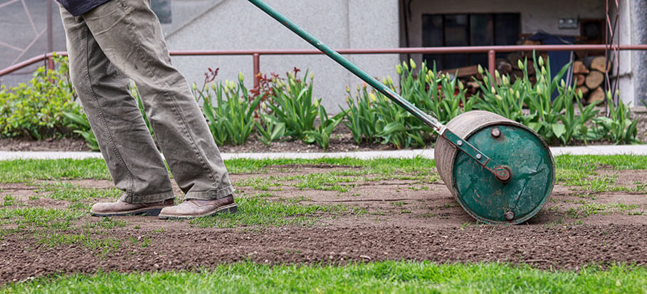 a gardener showing how to level out a bumpy tool using a lawn roller