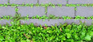 weeds in block paving