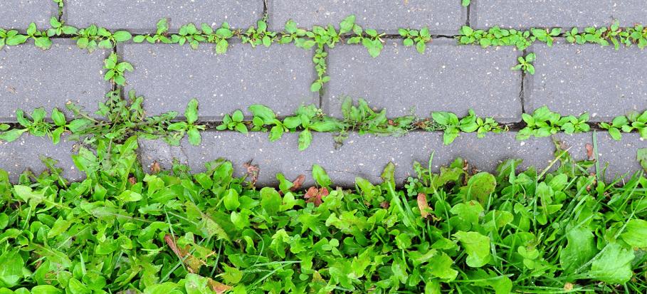 green weeds growing out between block paving