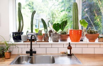 houseplants-lighting-guide-by-the-plant-rescuer