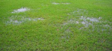 waterlogged lawn