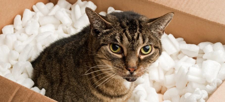 brown cat in a box