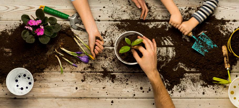 planting flowers for beginners