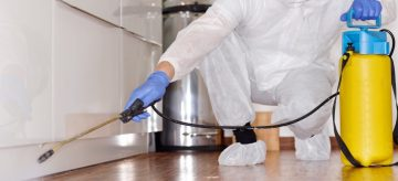 Professional pest controller in commercial kitchen