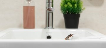 bathroom insects