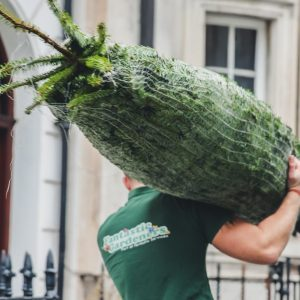 when to buy a real christmas tree