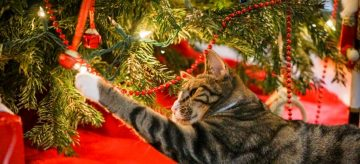 A cat playing with a Christmas tree