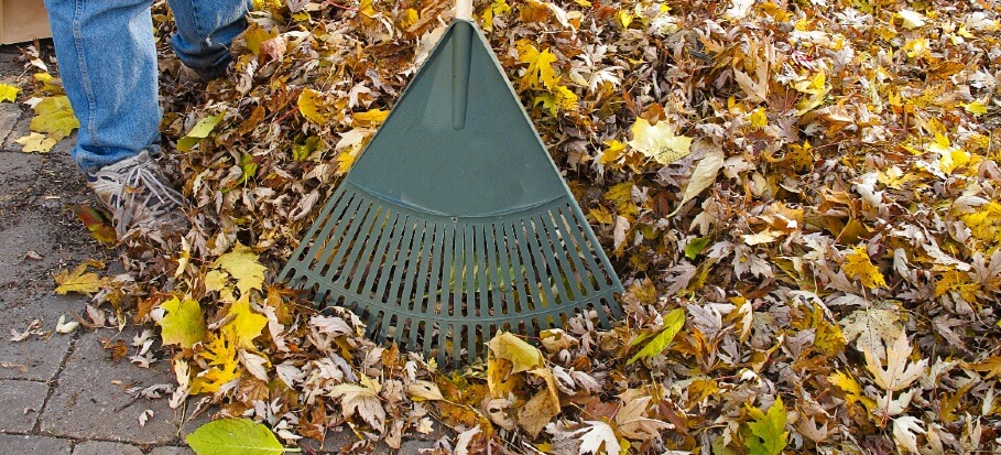 Raking leaves for leaf mulch